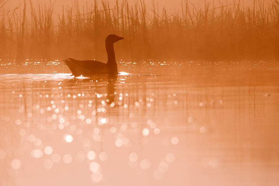 Early Morning Magic Photograph by Roeselien Raimond
