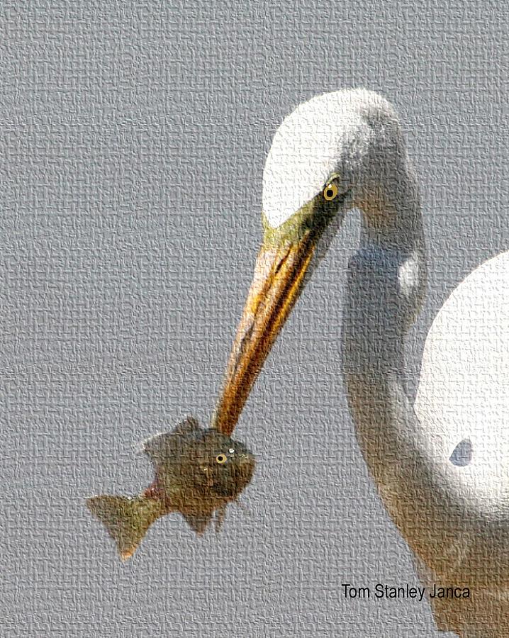 Grp Photograph - Egret Eats Fish by Tom Janca