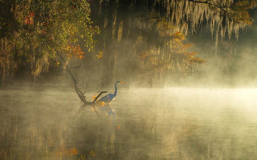 Caddo Photograph - Egret by Hua Zhu