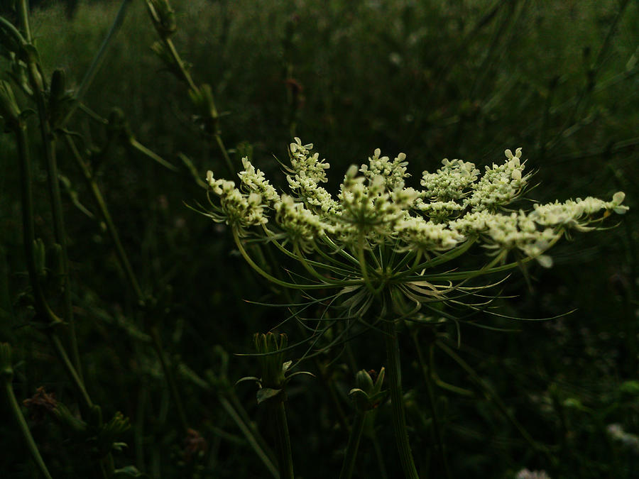 Plant Photograph - Energy by Lucy D