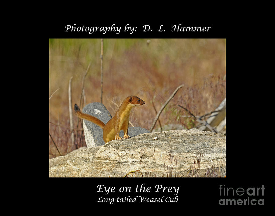 Wildlife Photograph - Eye On The Prey by Dennis Hammer