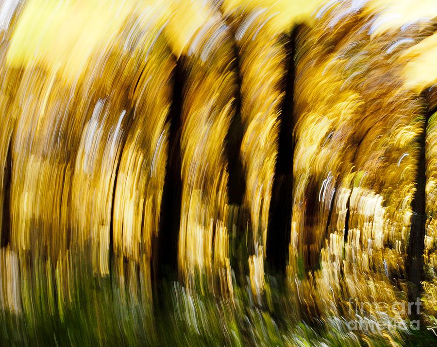 Autumn Photograph - Fall Abstract by Steven Ralser
