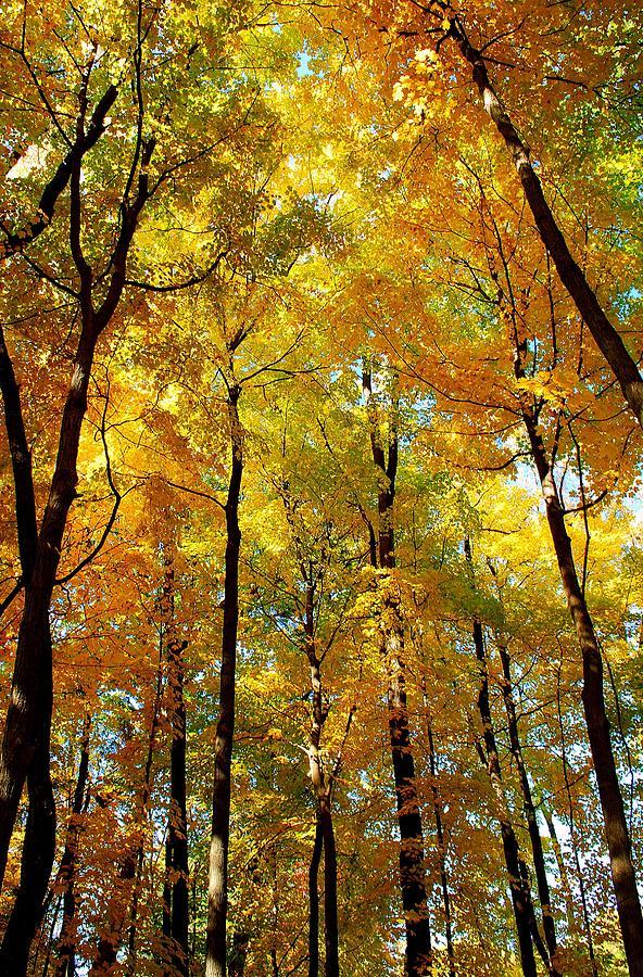 Fall Photograph - Fall by F Salem