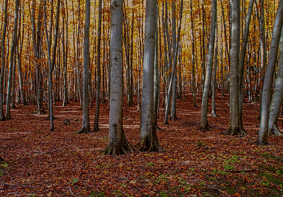 Nature Photograph - Fall Forest by Christine Czernin Morzin