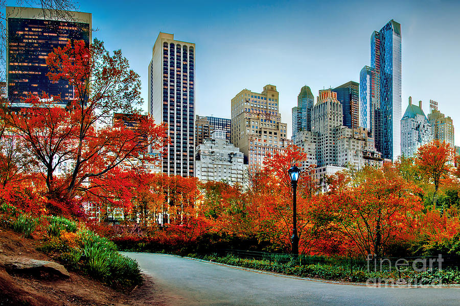 Fall In Central Park Photograph