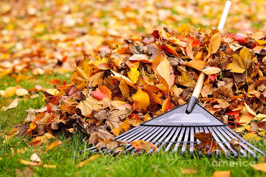 Rake Photograph - Fall leaves with rake by Elena Elisseeva