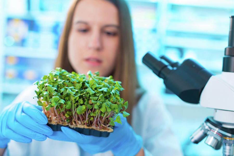 Female Photograph - Female Biologist Holding Seedlings by Wladimir Bulgar/science Photo Library