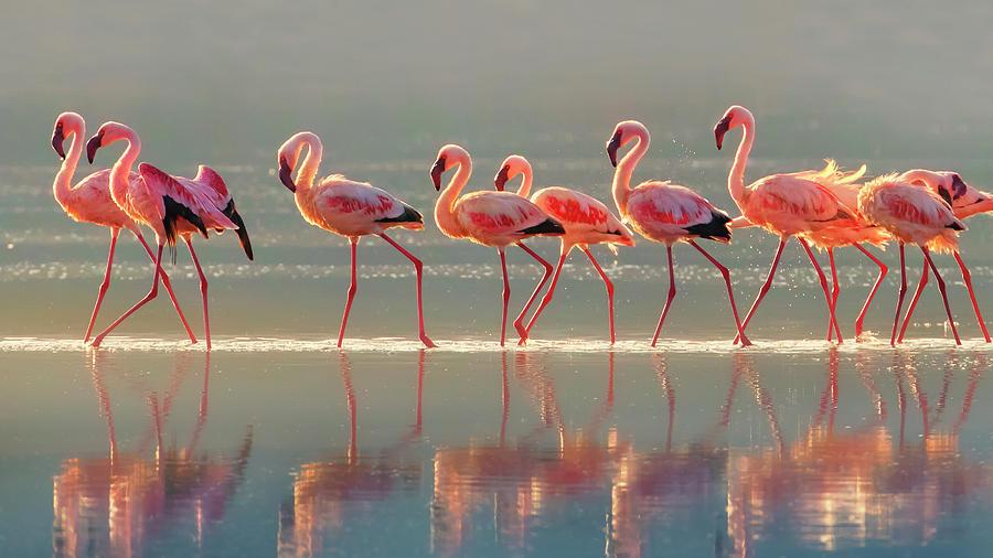 Flamingo Photograph - Flamingo by Phillip Chang
