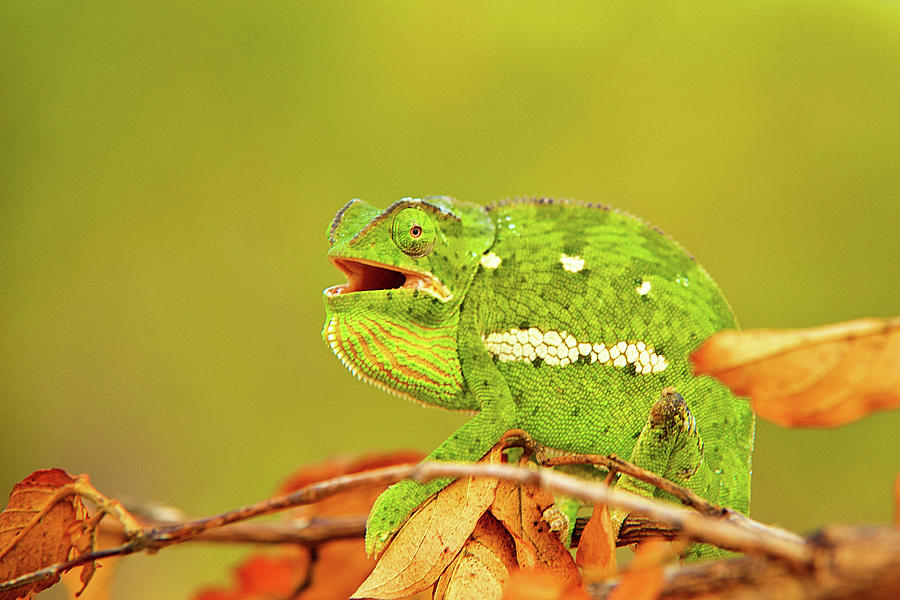 Image result for abstracts images of chameleons on autumn leaves