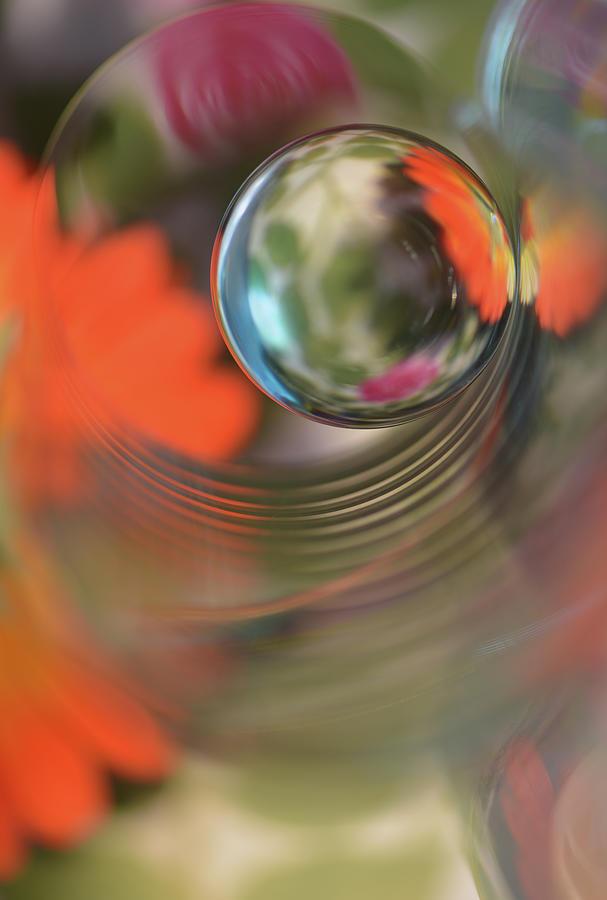 Macro Photograph - Floral Sphere by Heidi Westum