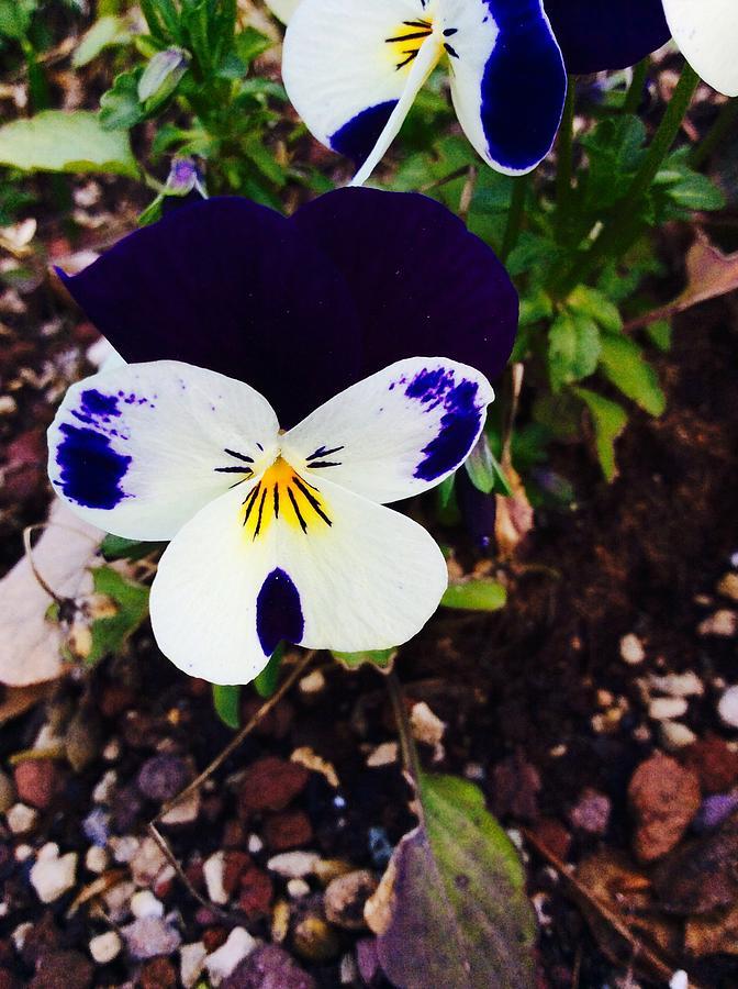 Flower Photograph - Flower by Niki Mastromonaco