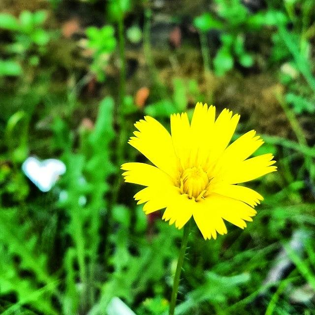 Beautiful Photograph - Yellow Flower by J Roustie