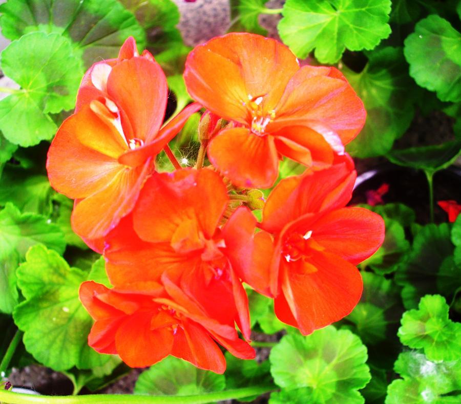 Flowers Photograph - Flowers by Sonya Ragyovska