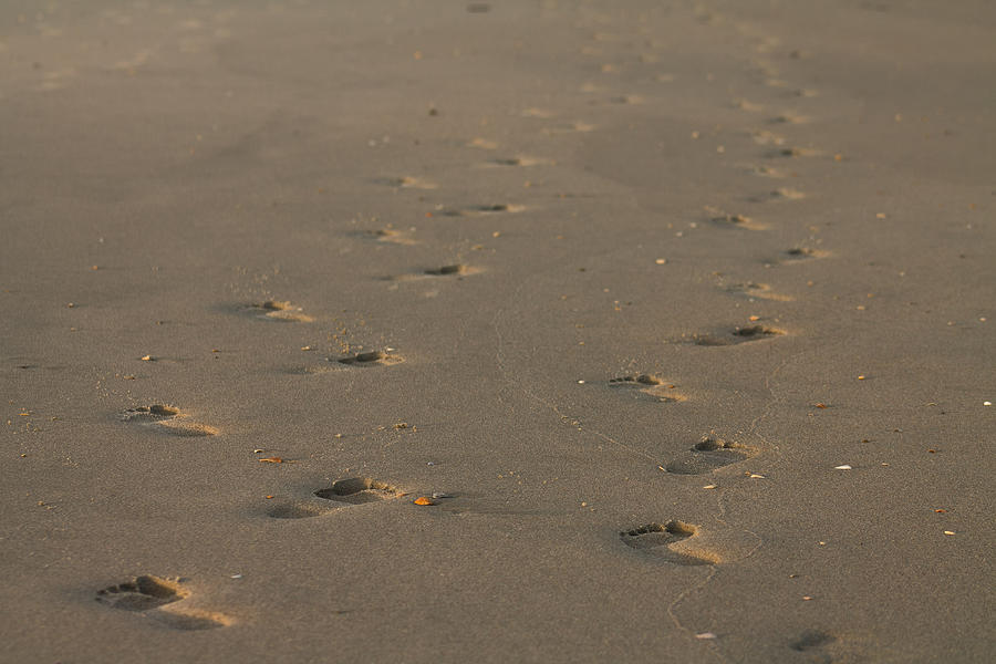 Footprints in the sand by Jessica Brown