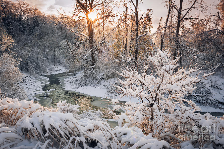 Winter Photograph - Forest Creek After Winter Storm by Elena Elisseeva