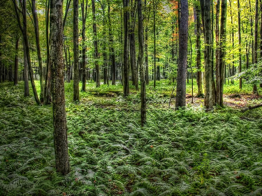 Forest Floor by David Armstrong