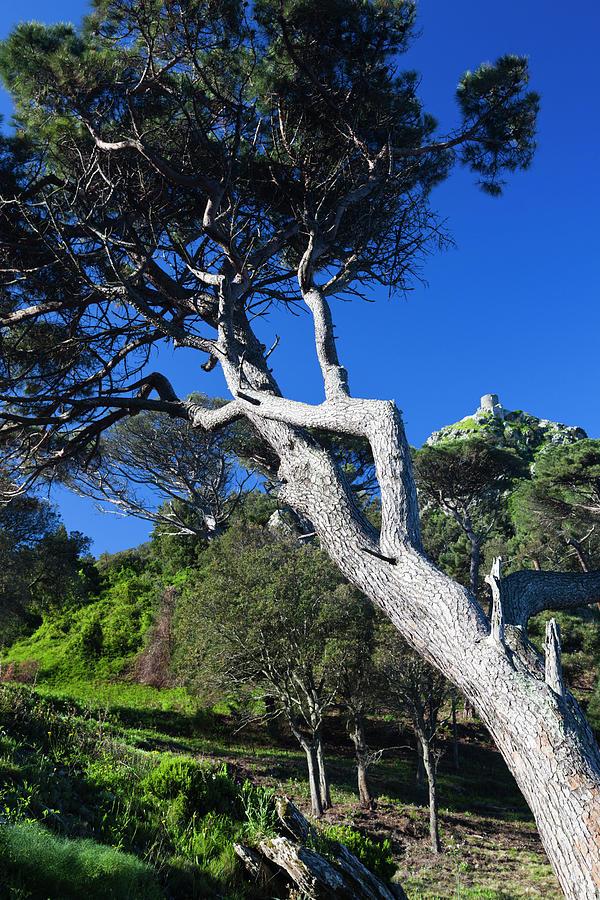 Corsica Photograph - France, Corsica, Le Cap Corse, Col De by Walter Bibikow