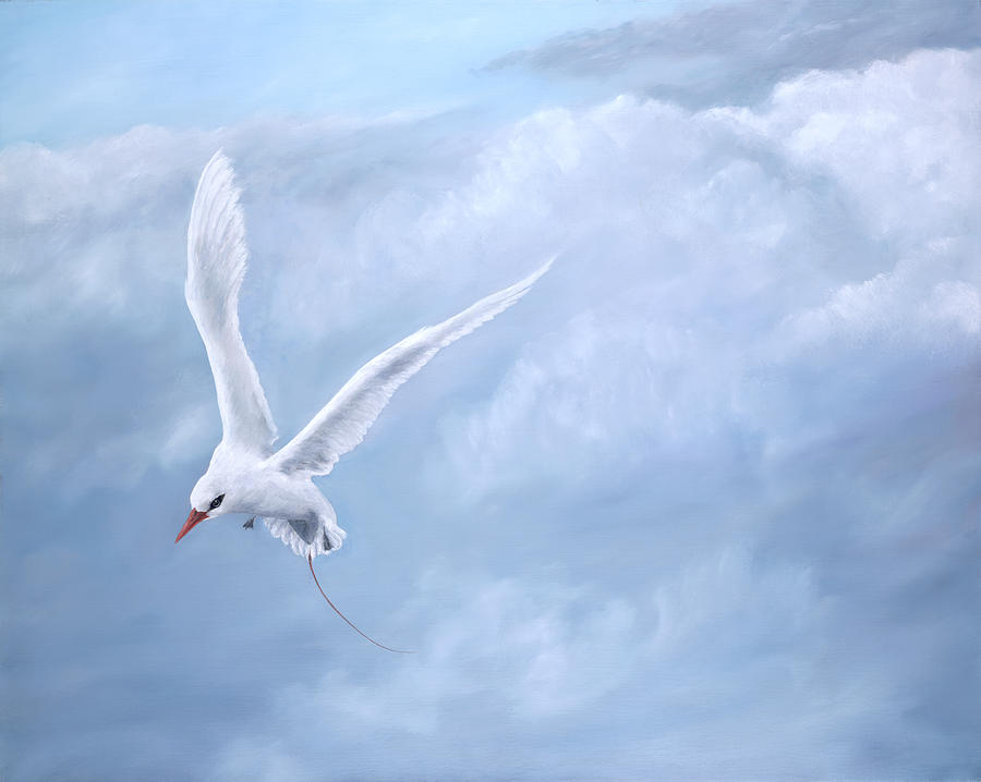 Red Tailed Tropicbird Painting - Freedom by Dorothea Hyde