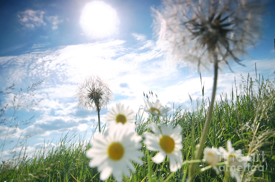 Background Photograph - Fresh Meadow Background by Michal Bednarek