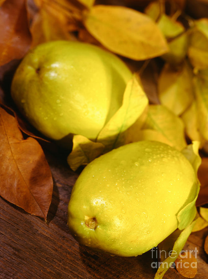 Food Photograph - Fresh Quince by Iris Richardson