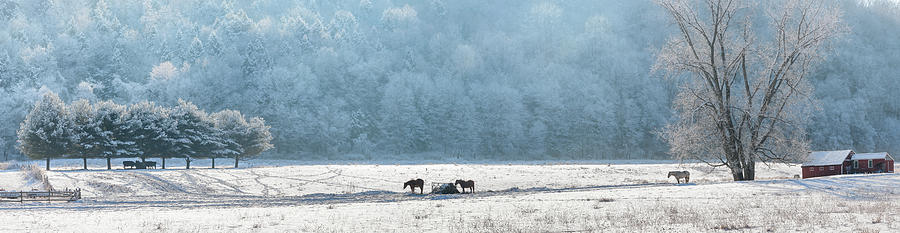 Farm Photograph - Frosty Morning by Bill Wakeley