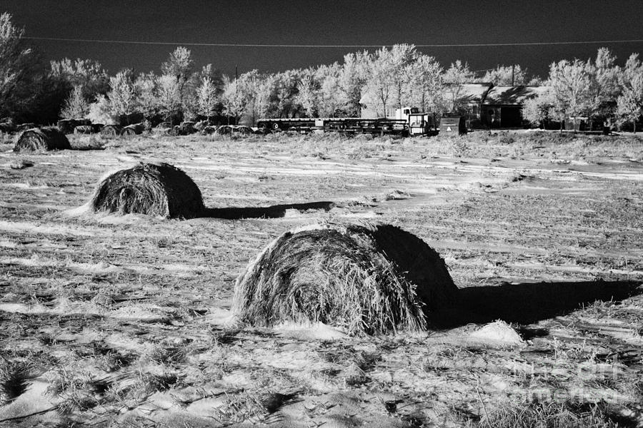 Frozen Photograph - frozen snow covered hay bales in a field Forget Saskatchewan Canada by Joe Fox