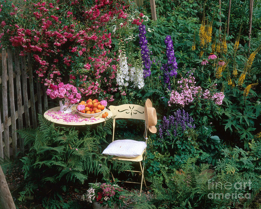 Plant Photograph - Garden With Chair by Hans Reinhard