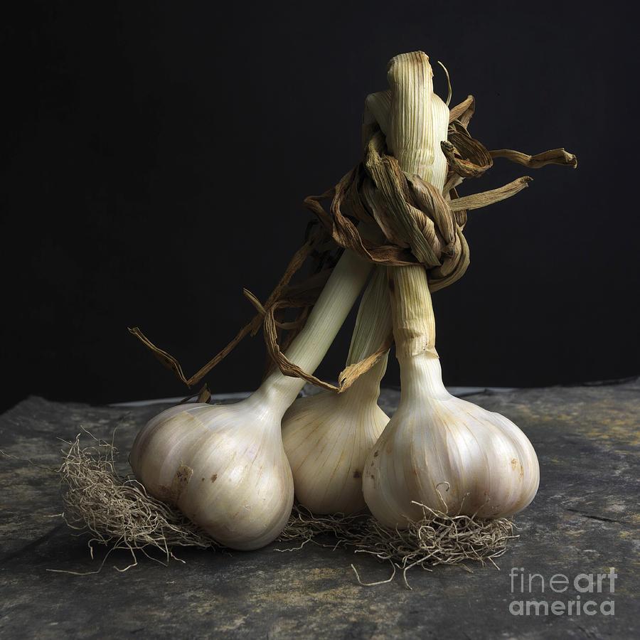 Indoors Photograph - Garlic by Bernard Jaubert