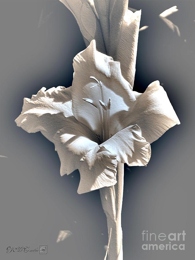 Gladiolus Digital Art - Gladiolus Named Nova Lux by J McCombie