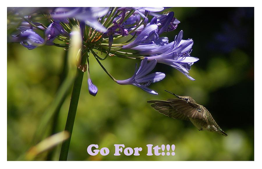 Go For It by David Armentrout