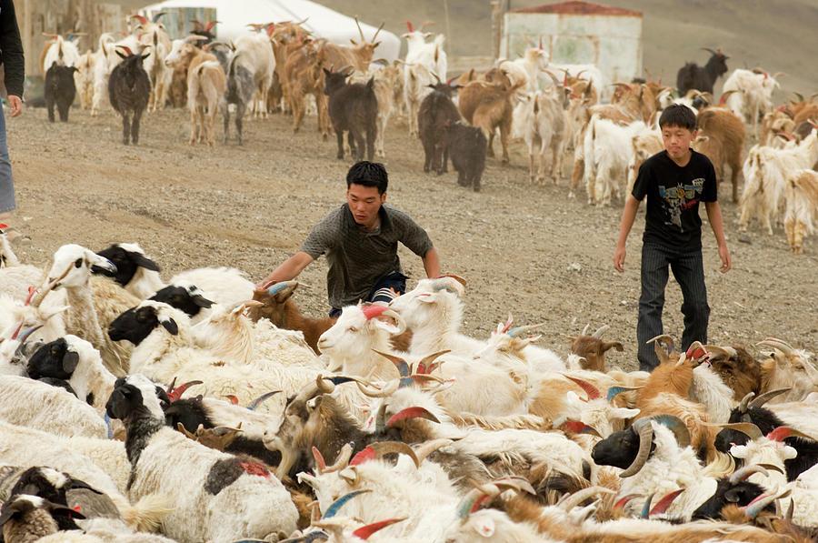 Gobi Nomadic Herders, Mongolia