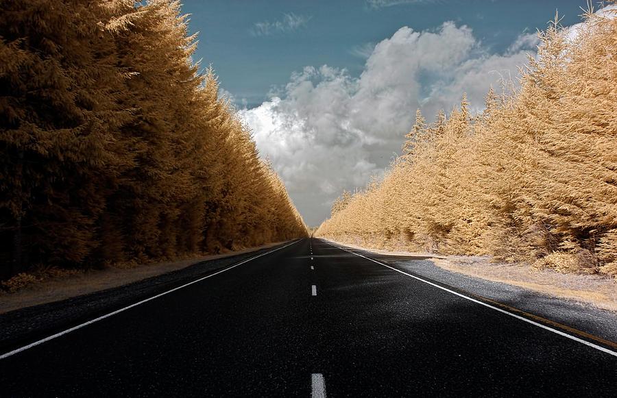 Roads Photograph - Golden Road by David Stine