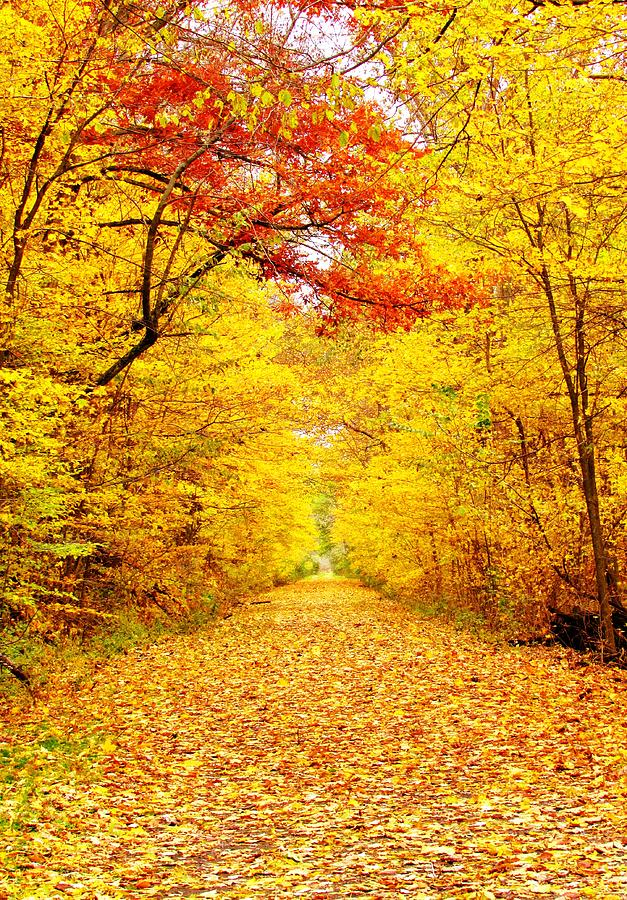 Fall Photograph - Golden Trail by Andrea Dale