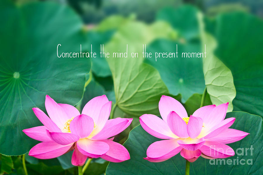 Lotus Photograph - Gorgeous Pair Pink Lotus Couple Blossoms Green Leaves by Beverly Claire Kaiya