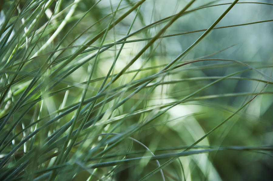 Abstract Photograph - Grass Abstract by Sabina  Horvat