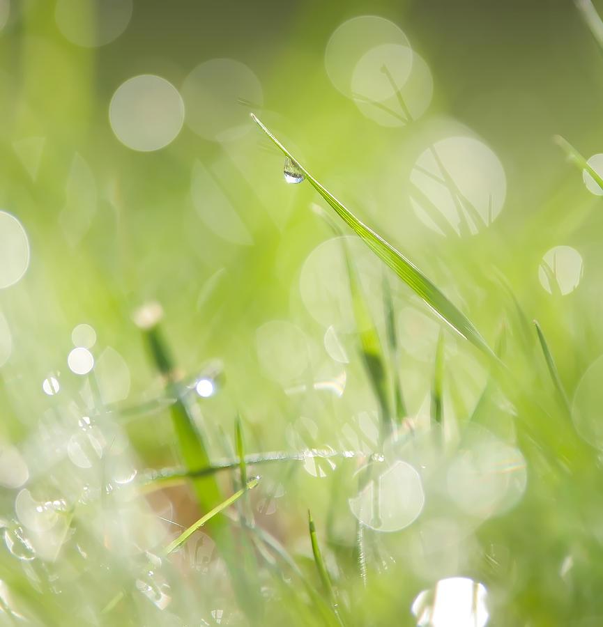 Grass Photograph