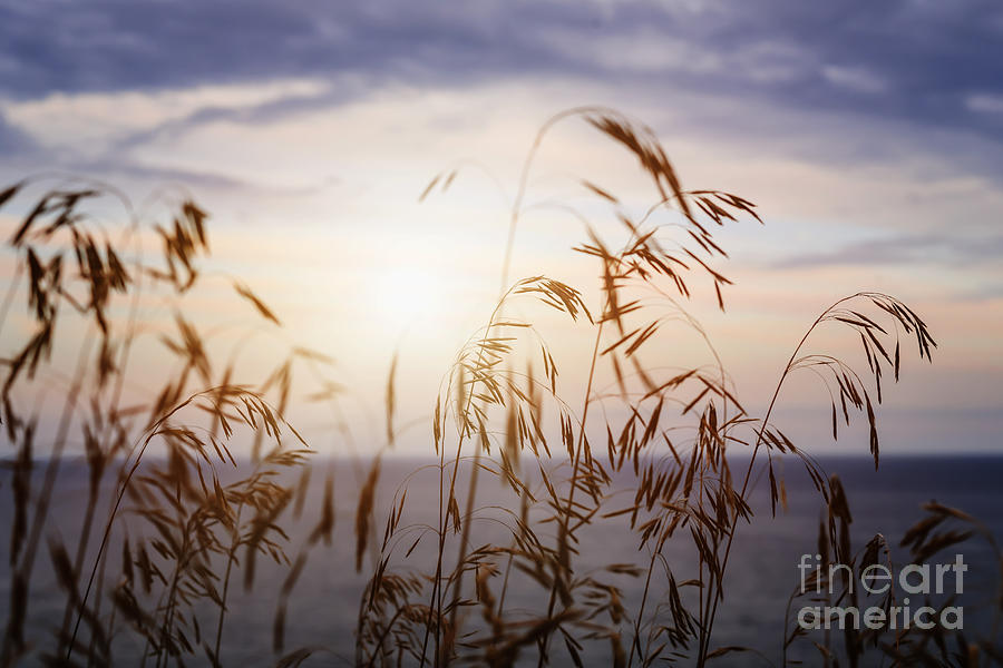 Grass Photograph - Grass At Sunset by Elena Elisseeva