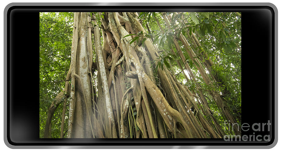 Great Apes Disappearing Habitats - Rare Earths For Electronics - Palm Oil Products - Stock Image Photograph