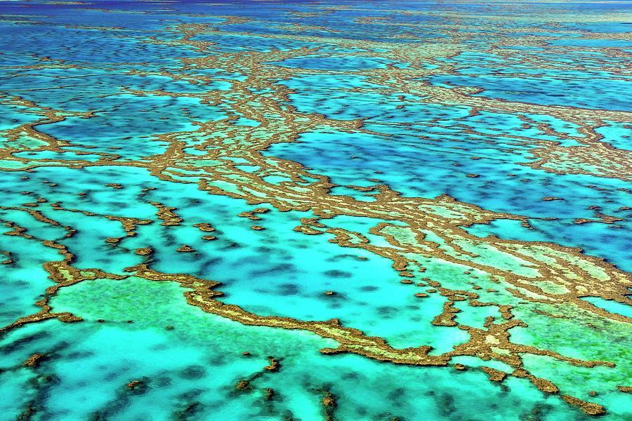 Biology Photograph - Great Barrier Reef by Bildagentur-online/mcphoto-schulz