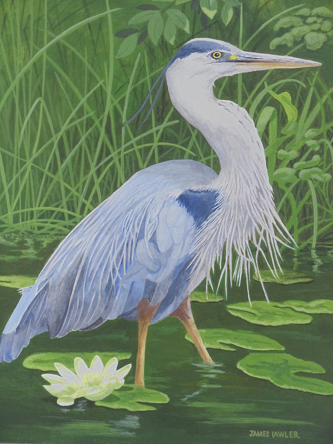 Great Blue Heron Painting by James Lawler