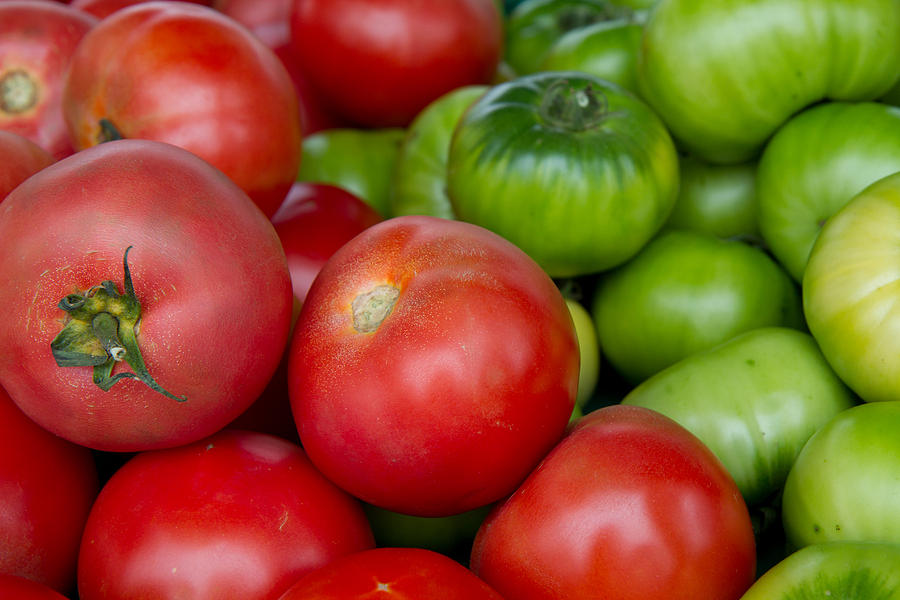green and red tomatoes by Dina Calvarese