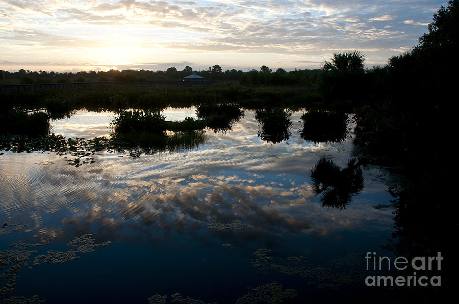 Nature Photograph - Green Cay Wetlands, Fl by Mark Newman
