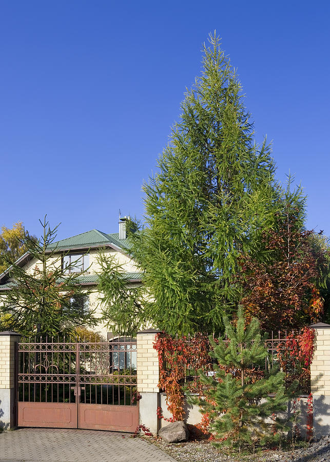 Garden Photograph - Green Fence Of Trees And Shrubs by Aleksandr Volkov