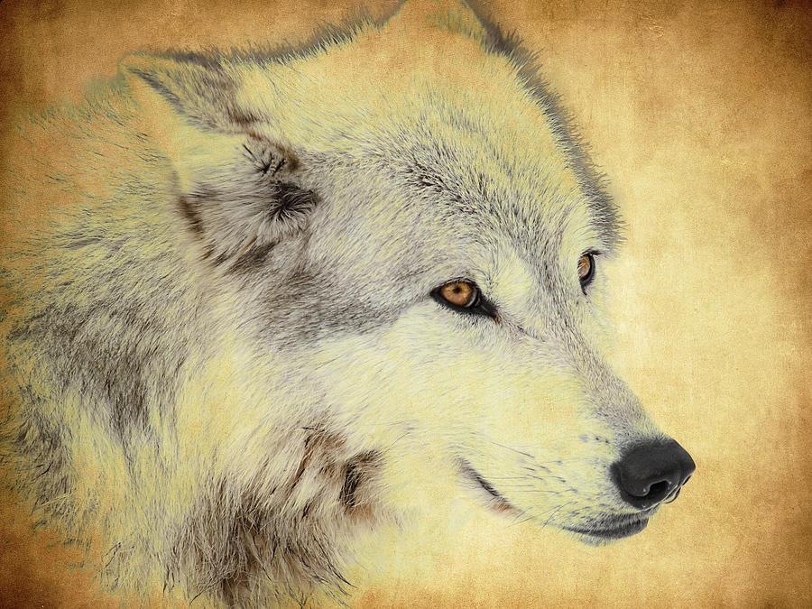 Wolf Photograph - Grey Wolf Art by Steve McKinzie