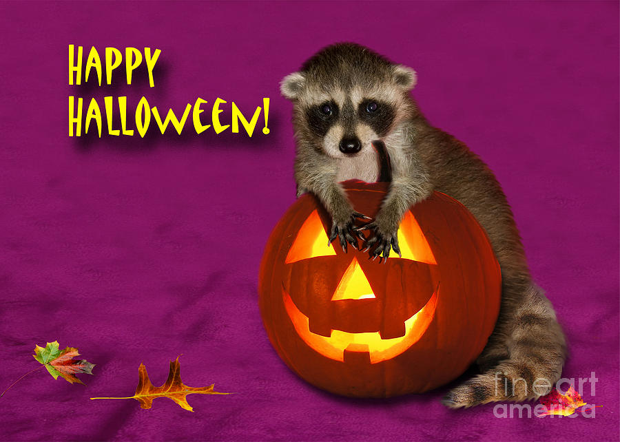 Raccoon Photograph - Halloween Raccoon by Jeanette K