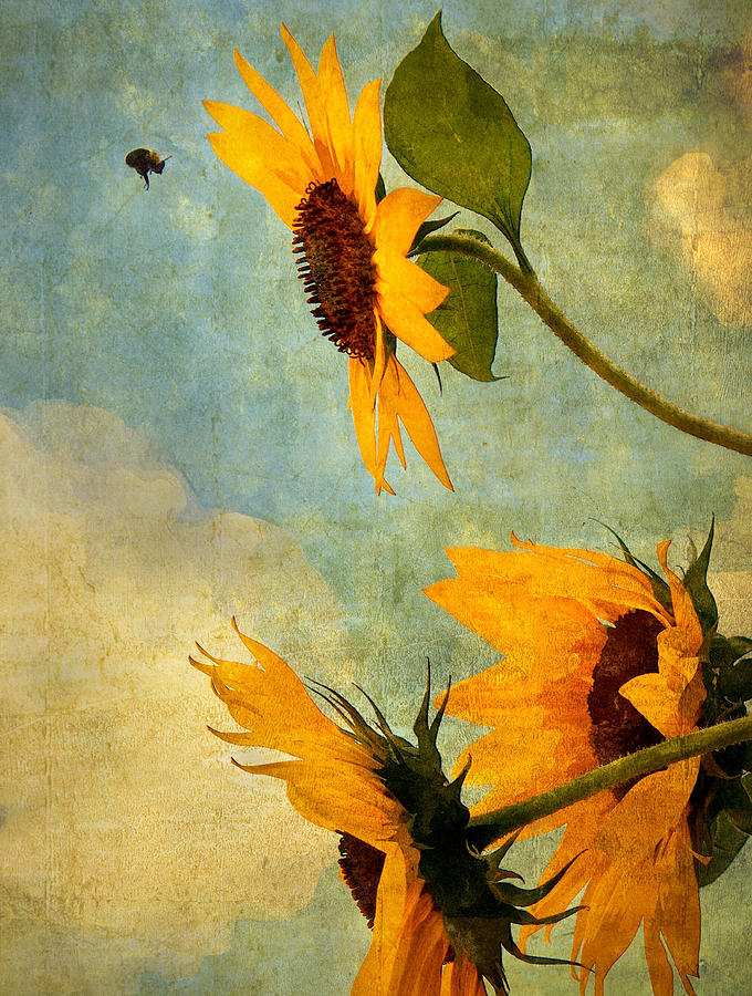 Sunflower Photograph - Happy Landing by William Schmid
