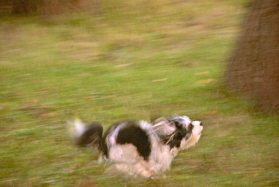 Dog Running Photograph - Harley Gettin It by Larry Bodinson