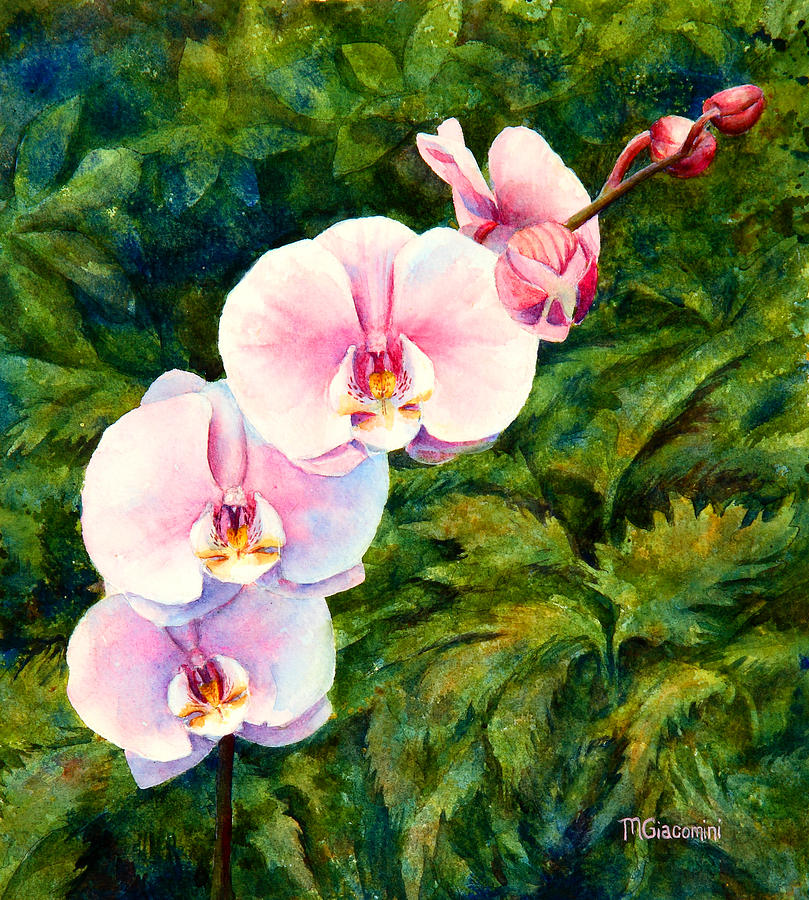 Hawaiian orchid by Mary Giacomini