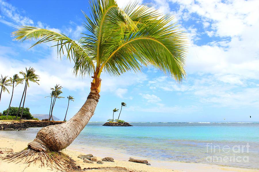 Hawaiian Paradise Photograph