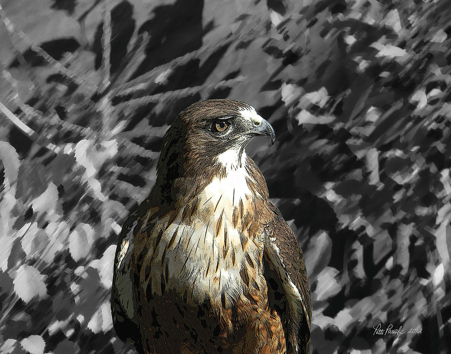 Hawk Of Prey Digital Art by Patti Parish